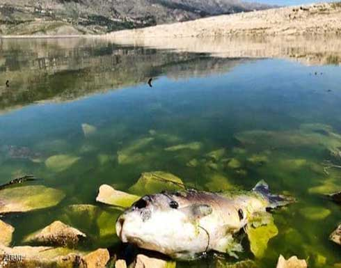 صور.. الاشتباه في فيروس وبائي غامض وراء نفوق أسماك بلبنان