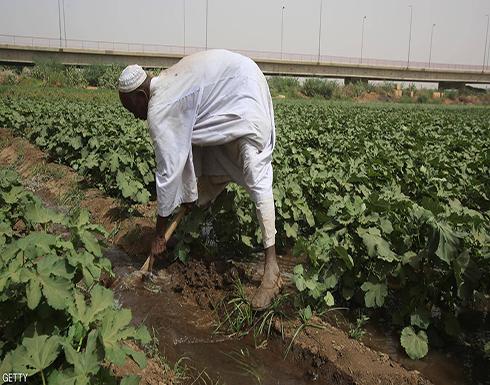 من أجل الاستثمار الزراعي.. السودان يفتح أبوابه أمام العالم