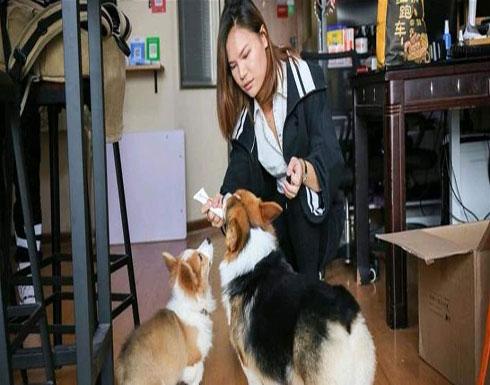 كلبان يتقاضيان راتبًا شهربًا.. قصتهما غريبة!