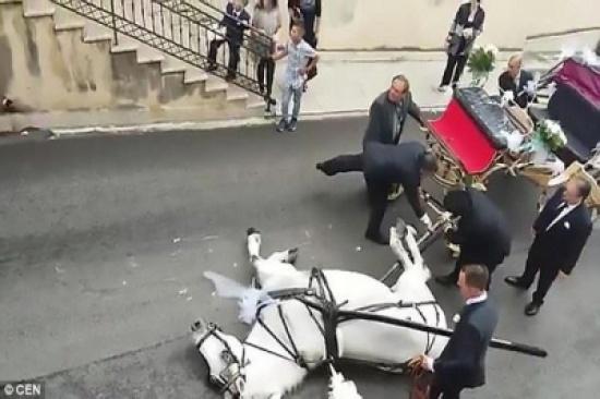 بالفيديو: حصان يفسد زفاف عروسين بسبب الوزن الزائد