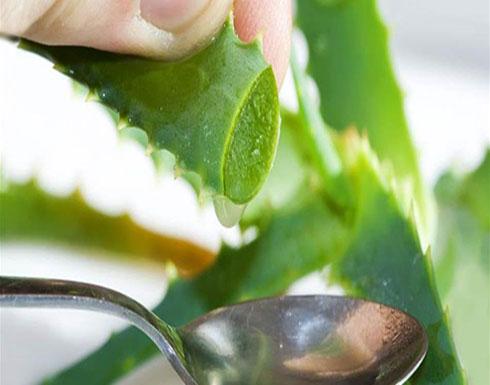 """يشفي ويحارب الإلتهابات ويجعل البشرة مثاليّة.. ضعوا """"نبات الخلود"""" في منازلكم!"""