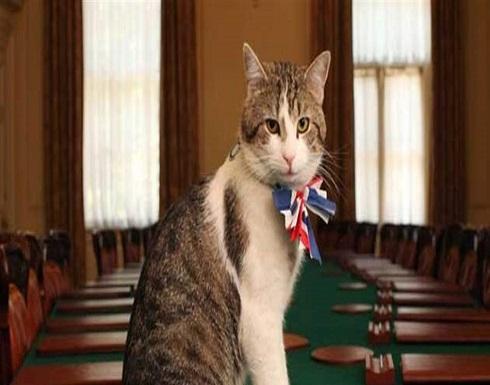 """""""كبير صائدي الفئران"""" في رئاسة وزراء بريطانيا.. موظّفٌ حكومي! (فيديو)"""