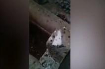 """مشاهد صادمة.. ميليشيا أسد تنبش ضريح الخليفة """"عمر بن عبد العزيز"""" وزوجته بإدلب .. بالفيديو"""