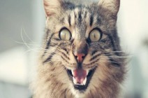 """""""قطة شريرة"""" تحبس امرأة يومين.. وفرق الإنقاذ تتدخل في روسيا"""