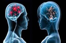 خبر صادم: مخ المرأة أصغر من الرجل بـ4 سنوات!