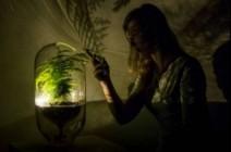 مشروع هولندي لتحويل النباتات إلى بطاريات للإضاءة!