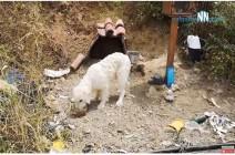 تشعل السوشيال ميديا.. مكافأة مالية لمن يعثر على الكلب الكويتي «دحدوح»