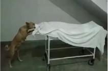 فيديو صادم.. كلب ضال يأكل جثة فتاة في مشرحة المستشفى بالهند