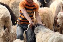 للأردنيين : معلومات يجب ان تعرفوها قبل شراء الاضحية