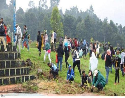 رقم قياسي.. إثيوبيا تزرع 224 مليون شجرة في يوم واحد