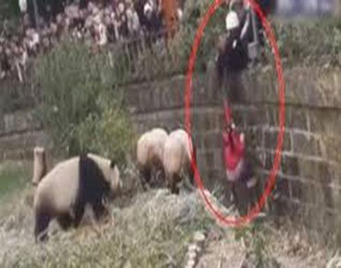 بالفيديو : سقوط فتاة داخل قفص باندا عملاقة داخل محمية