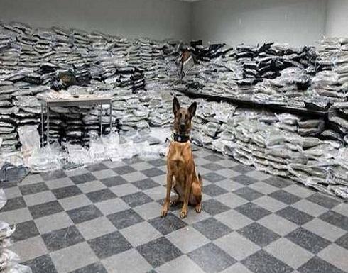 كلب يحبط عملية تهريب مخدرات بـ 10 ملايين دولار!