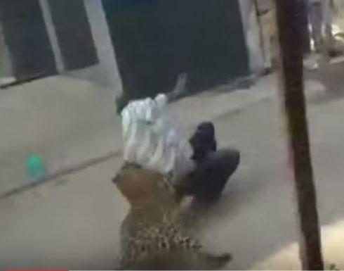 لحظة مهاجمة فهد شرس لسكان البلدة  (فيديو)