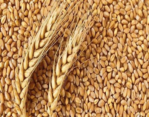 السعودية والإمارات تدعمان السودان بـ540 ألف طن من القمح