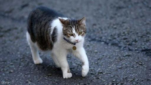 أستراليا : وفاة امرأة بعد أن لحستها قطة !
