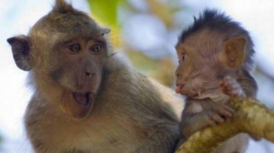 """ما هي قصة المثل الشعبي """"القرد بعين امه غزال""""؟"""