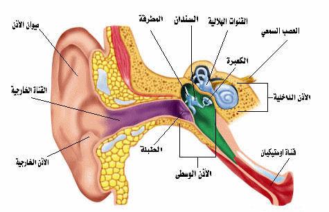 التهاب الأذن الوسطى الحاد .. أسبابه وعلاجه