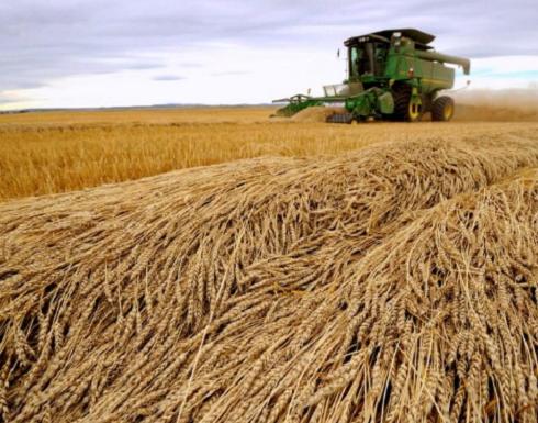 مؤسسة الحبوب السعودية توقف شراء القمح والشعير الكنديين