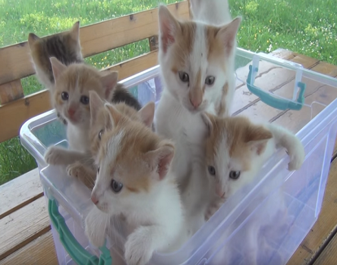 مؤسسة حكومية أمريكية أخفت قتل 3000 قطة في تجارب مخبرية