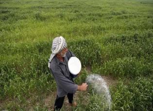 بعد حظر زراعته لموسم.. العراق يتوقع إنتاجا وفيرا من الأرز