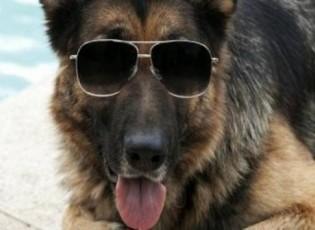 هذا الكلب ثروته 375 مليون دولار!