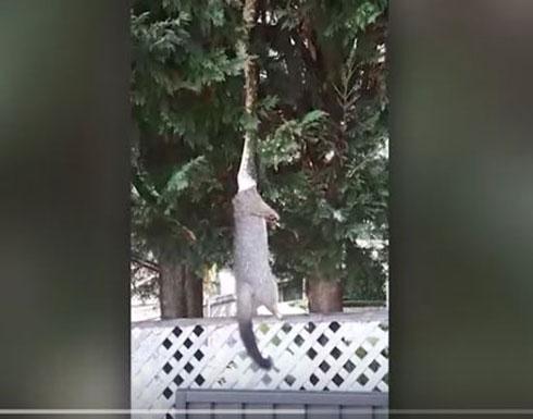 ثعبان يتدلى من شجرة لسحب فريسته في مشهد مرعب (فيديو)