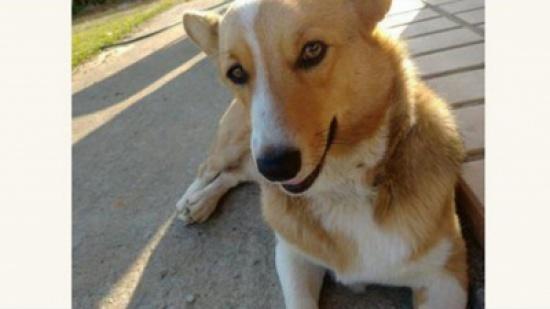 قتل كلب جيرانه وطها لحمه... وما فعله بعدها صادم!