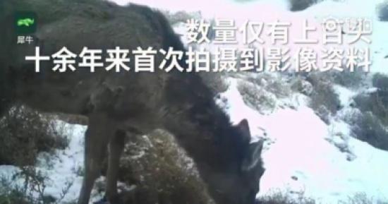 بالفيديو.. مخلوق غامض يجمع بين الحصان والغزال يظهر لأول مرة