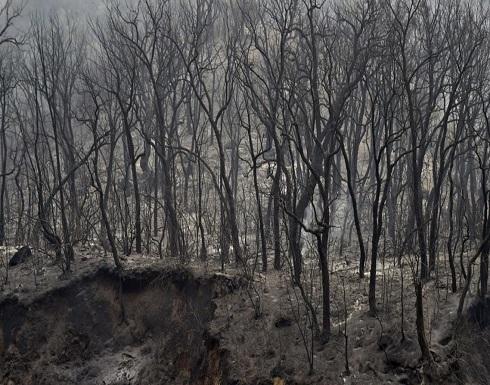 الجزائر.. اعتقال 30 شخصا على علاقة بحرائق الغابات