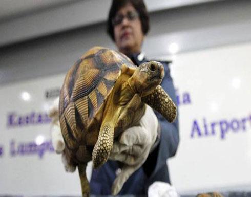 إنقاذ آلاف السلاحف النادرة من يد تجار في مدغشقر