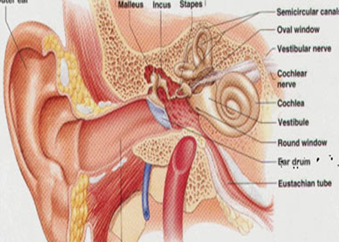 دراسة أمريكية: فيروسات الأنف قد تؤدى إلى عدوى الأذن الوسطى