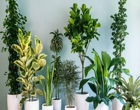 4 نباتات تساعد على النوم بعمق