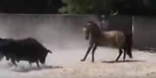 """حصان يغلب ثوراً هائجاً بشكل غير متوقع """"شاهد"""""""