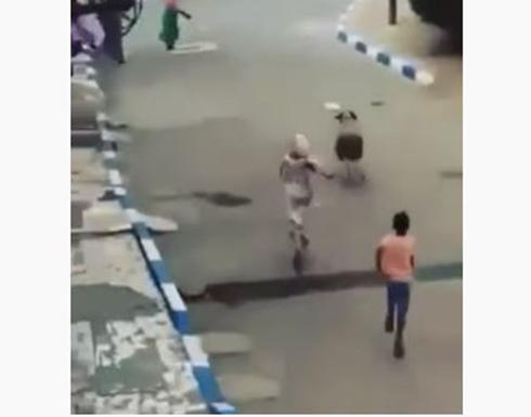 هروب اضاحي العيد من أصحابها .. بالفيديو