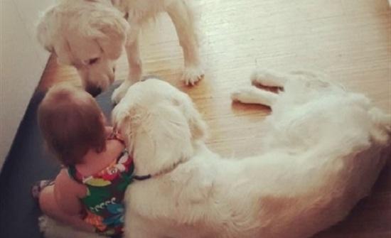 لقطات طريفة لأبوين يكتشفان جريمة بالصدفة أبطالها طفلة وكلبين