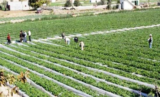 إعفاء المزارعين الذين تقل مبيعاتهم عن مليون دينار من ضريبة الدخل