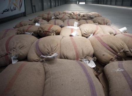 مصر تستهدف زيادة إنتاج القمح المحلي إلى 10 ملايين طن