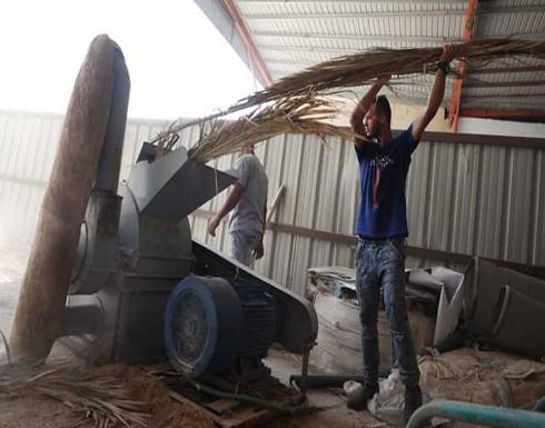 صور : فلسطين.. أول مصنع لإنتاج المناديل الورقية من سعف النخيل