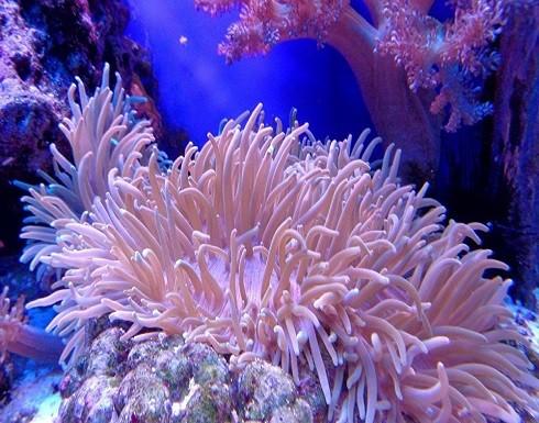 التجارب أثبتت أن الشعاب المرجانية تتمتع بحاسة السمع
