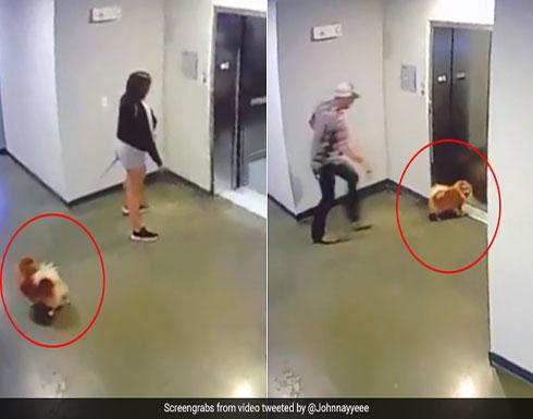بالفيديو: رجل ينقذ كلبا علق رسنه بمصعد دون أن تنتبه صاحبته في أمريكا