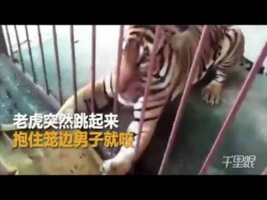 بالفيديو... نمر يباغت رجلا وينقض عليه بسرعة فائقة