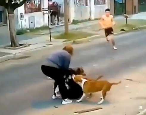 ثلاثة كلاب شرسة تهاجم سيدة وسط شارع عام في الارجنتين .. بالفيديو