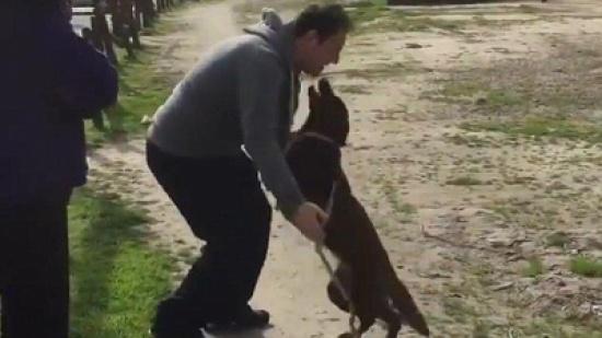 بالفيديو.. مشهد مؤثر لكلب يلتقي صاحبه بعد غياب طويل!