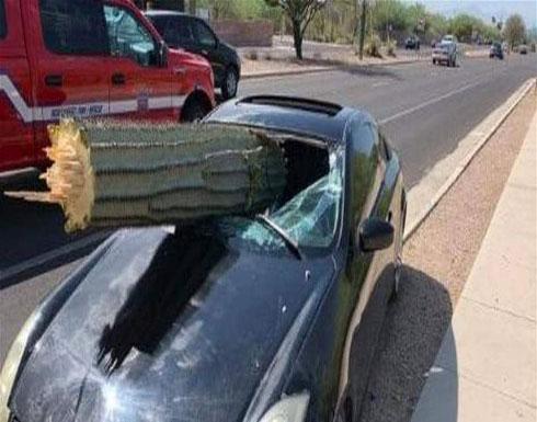 نجا بأعجوبة بعدما وقعت شجرة على سيارته!