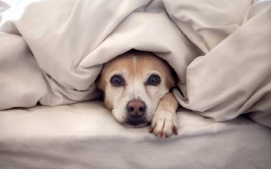 لهذه الأسباب.. أبعد كلابك الأليفة عن فراشك
