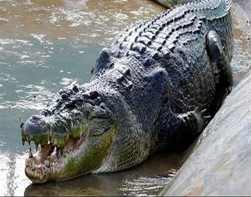 رحلة غطس مأسوية.. تمساحٌ بطول 3 أمتار افترسه تحت المياه!