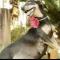 أنثى كلب تشعل الإنترنت بجلسة تصوير خلال حملها! (صور)