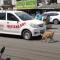 """فيديو مؤثر.. كلبة """"مكلومة"""" تستجدي المارة لإنقاذ جروها المصاب"""