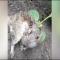 مشاهد غريبة لنبتة تنمو على ظهر فأر!