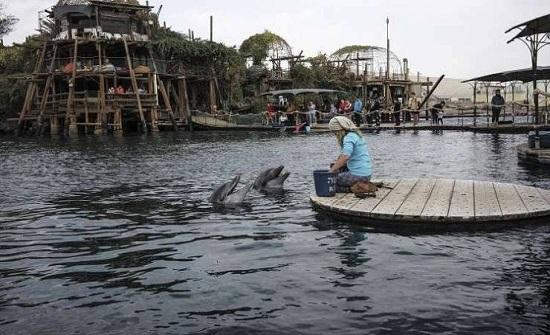 علماء: الدلافين تنادي بعضها بـ 'أسماء' كالبشر!